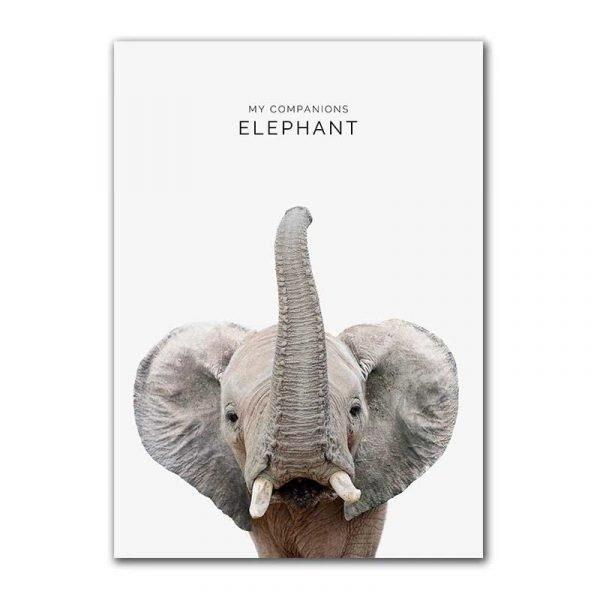 Toile affiche éléphant
