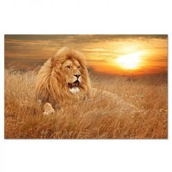 Toile lion savane