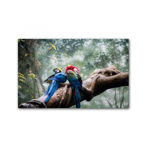 Toile perroquet bleus
