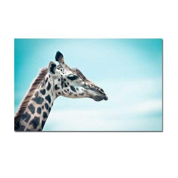 Toile tête de girafe