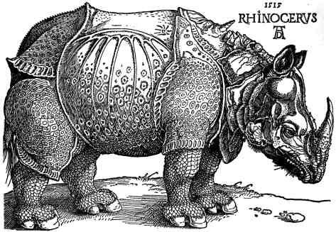 peinture rhinocéros art