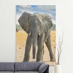 Tableau bébé éléphant