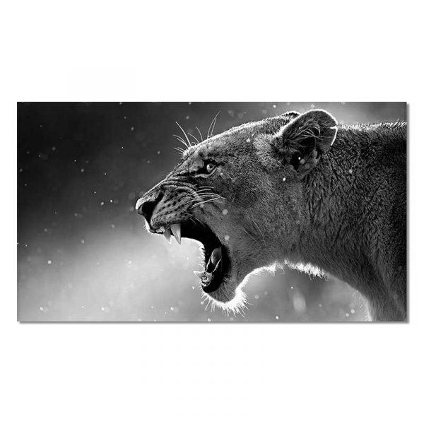 Tableau sur toile lionne noir et blanc