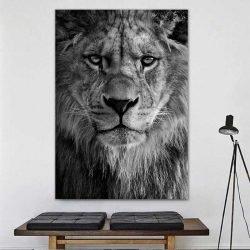 Tableau tête de lion noir et blanc