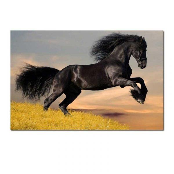 Toile cheval noir