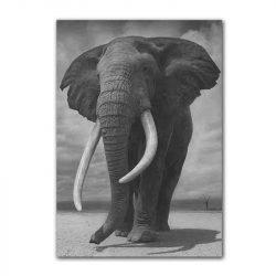 Tableau sur toile éléphant d'afrique