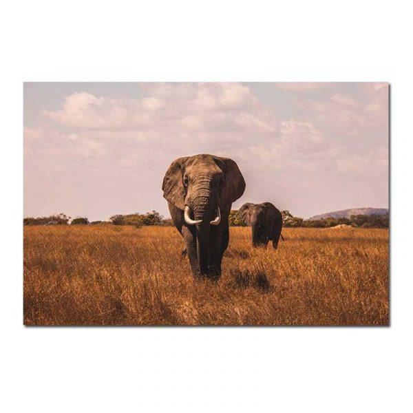 Toile éléphant savane
