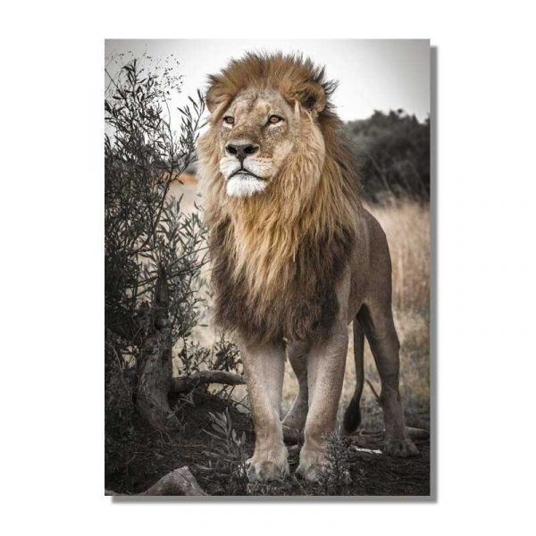 Tableau sur toile lion sauvage