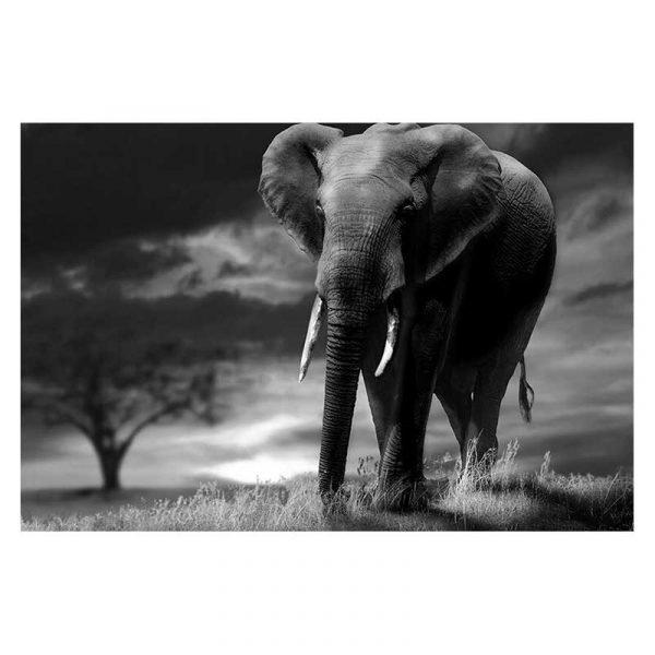Tableau sur toile photo éléphant