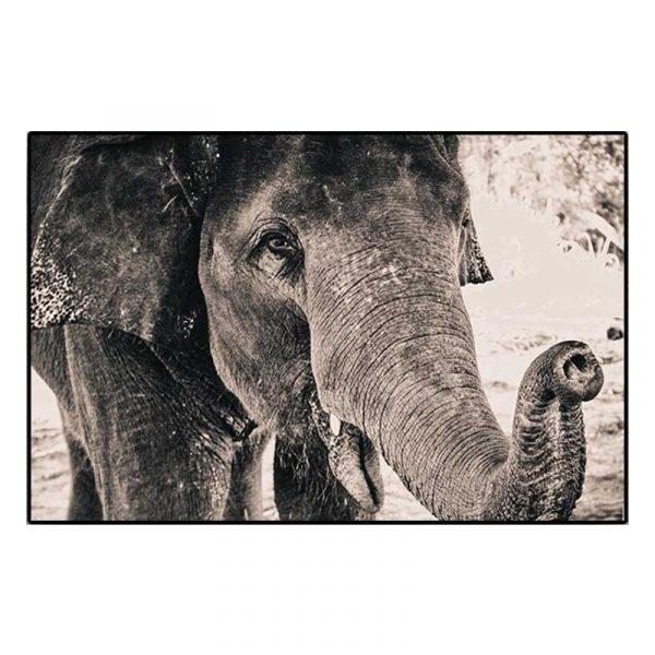 Tableau sur toile tête éléphant