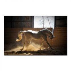 Toile cheval blanc