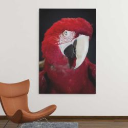 Tableau perroquet rouge